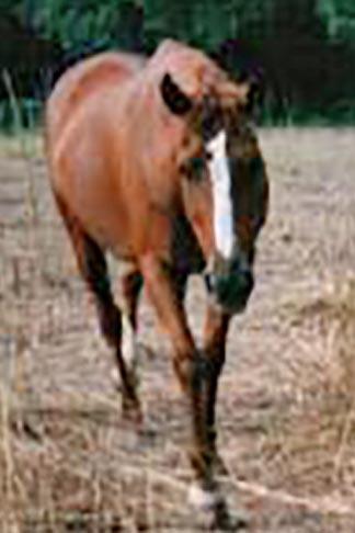 Name:  horse.jpg Views: 26 Size:  22.0 KB