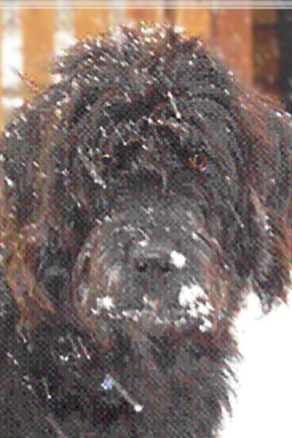 Name:  dog.jpg Views: 28 Size:  48.0 KB