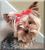 Name:  dog.jpg Views: 35 Size:  9.4 KB