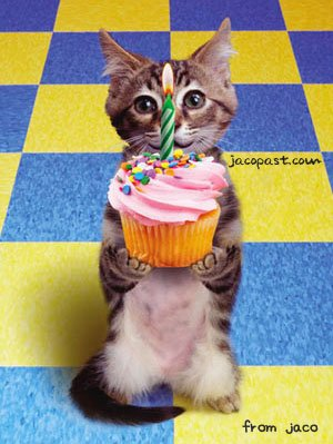 Name:  birthdayCupcakecat.jpg Views: 44 Size:  56.0 KB