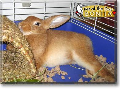 palomino rabbits - photo #22