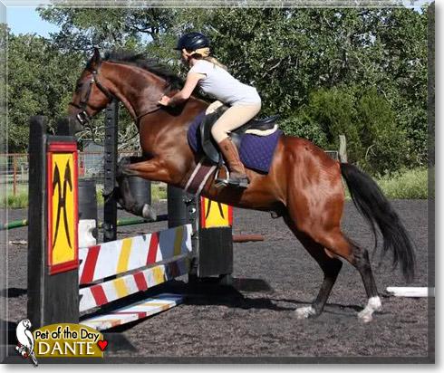 Dante - Bay Quarter Horse Gelding - January 8, 2011