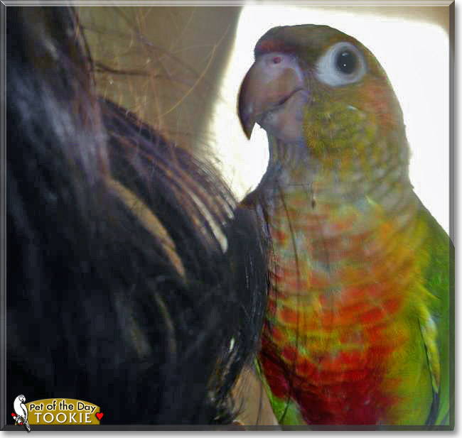 Tookie Green Cheeked Parakeet March 8 2013