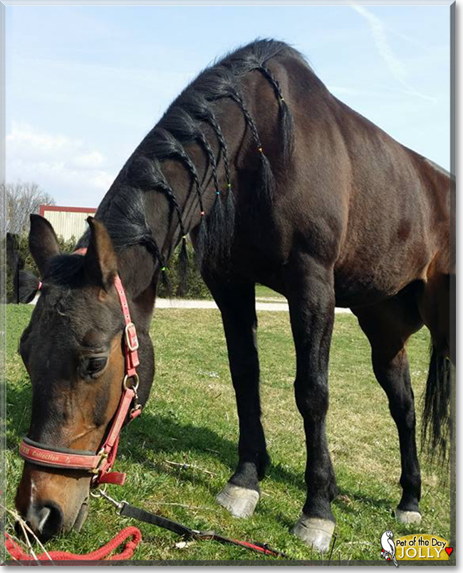 Jolly the Arabian/Pinto Horse, the Pet of the Day