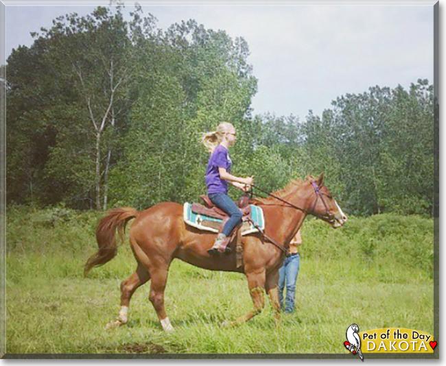 Dakota the Quarter Horse, the Pet of the Day
