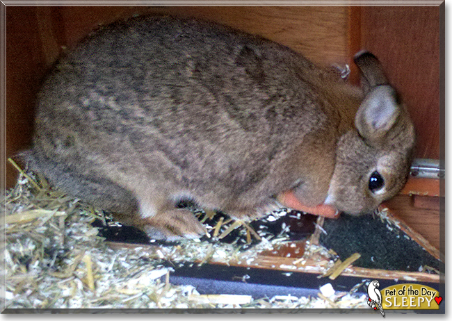 Sleepy the Rabbit, the Pet of the Day
