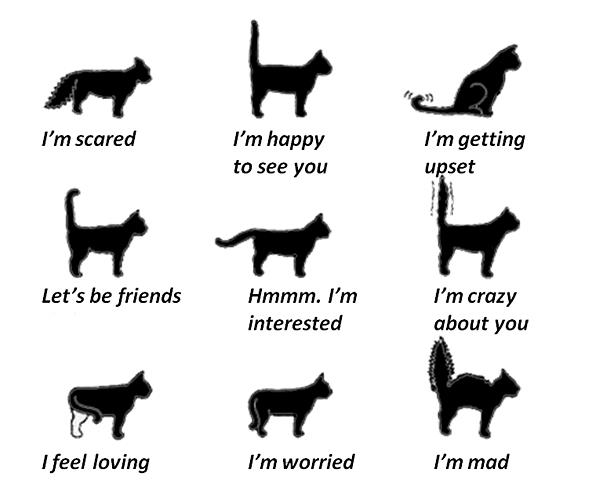 cat emotions...the tail tells it all